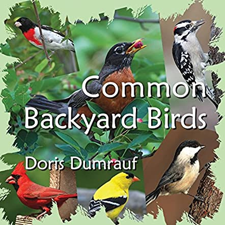 Common Backyard Birds