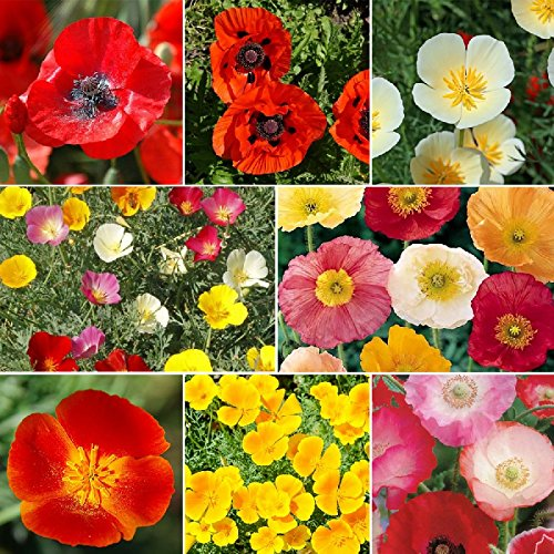 Poppy Power - Poppy Flower Seed Mix - 10 Pounds, Mixed by Eden Brothers (Image #1)