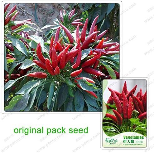 35 semillas / pack, semillas de pimienta de cayena, chile vegetales, semillas de plantas en maceta de plantas balcón: Amazon.es: Jardín