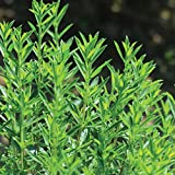 David's Garden Seeds Herb Savory Winter SL8228 (Green) 200 Non-GMO, Open Pollinated Seeds