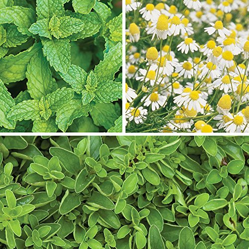 Burpee Tea Time Mix Collection Seeds 3 packets of seed