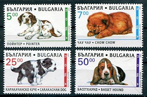 bulgaria-stamp-set-scott-3969-3972-4-stamps-1997-pointer-chow-chow-basset-hound-carakachan-mnh