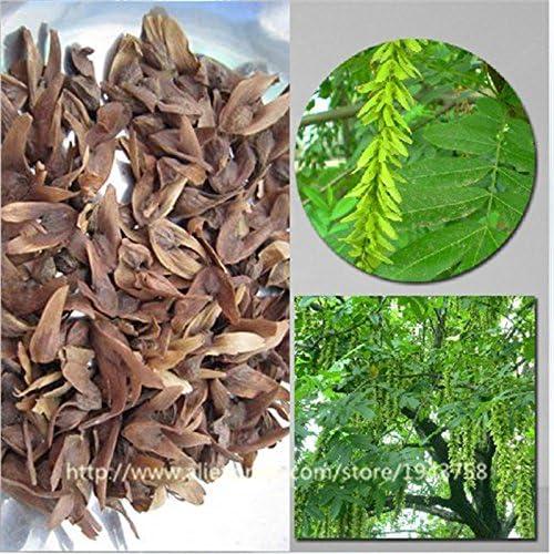 100pcs árbol Semillas hermosas fresca gigante de la decoración del jardín semillas del árbol de sauce verde para bonsai familia de Plantas de jardín: Amazon.es: Jardín