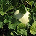 Honeydew Seeds - Green Flesh - Heirloom - Liliana's Garden