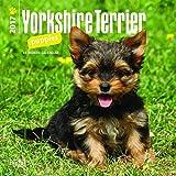 Yorkshire Terrier Puppies 2017 Mini 7x7