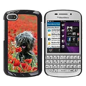 Caucho caso de Shell duro de la cubierta de accesorios de protección BY RAYDREAMMM - BlackBerry Q10 - Surfer Dog On Field