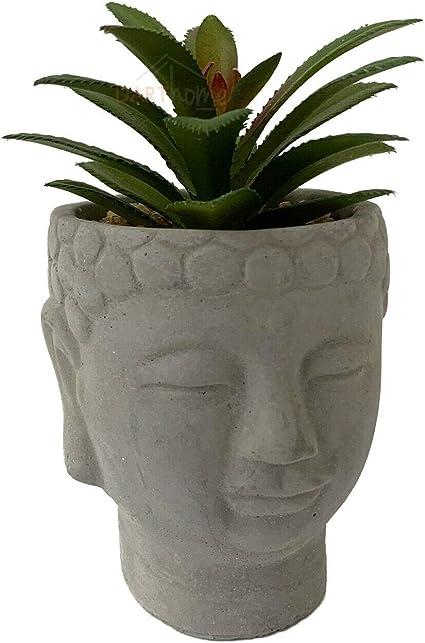 BUDDHA HEAD SUCCULENT 16 CM