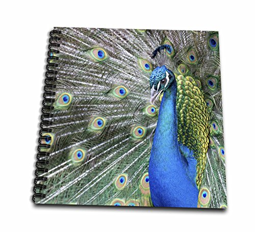 3dRose Danita Delimont - Birds - Male Peacock displaying his tail feathers, South Carolina - Memory Book 12 x 12 inch (db_279407_2) (Feathers Displaying Peacock)