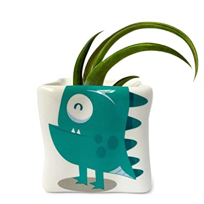 Circinata Earthlingz - Includes Living Air Plant, Character Pot, and Accessories Sticker Pack : Garden & Outdoor