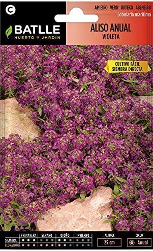 Semillas de Flores - Aliso Anual violeta - Batlle: Amazon.es: Jardín