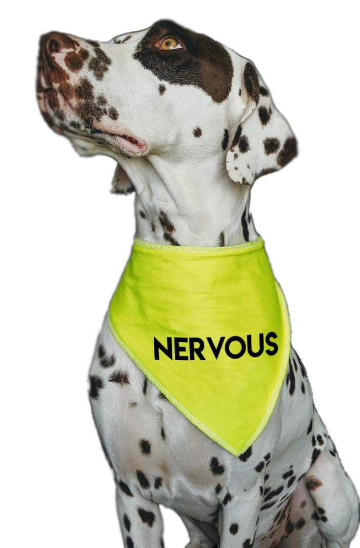 Dachshunds /& Cats Spoilt Rotten Pets S1 BLUE NERVOUS Warning Alert Dog Bandana For Dogs With Anxiety /& Social Behaviour Issues Suitable For Miniature Dogs