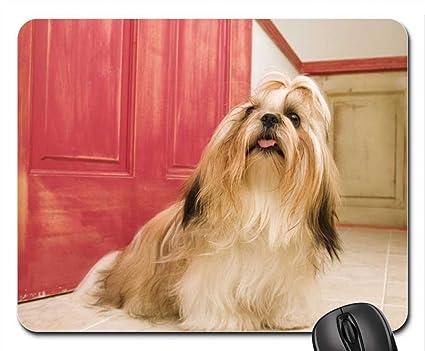 Amazoncom Shih Tzu Long Hair Dog Mouse Pad Mousepad Dogs Mouse
