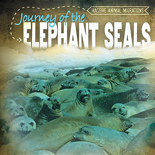elephant seals - 2