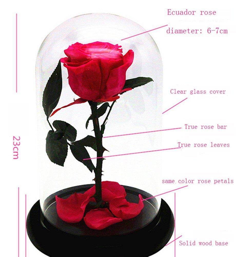 Rosa criogenizada en soporte de cristal cubierto, inspiración de La Bella y la Bestia: Amazon.es: Hogar