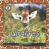 Safari Readers: Giraffes (Safari Readers - Wildlife Books for Kids)
