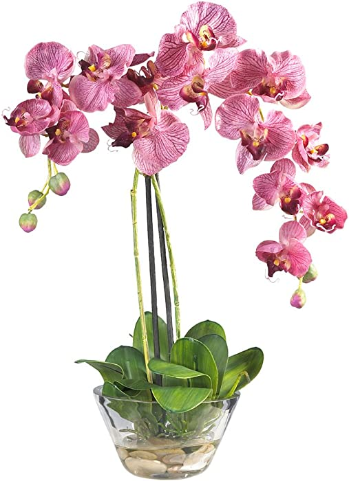 Top 10 Plants In Glass Decor