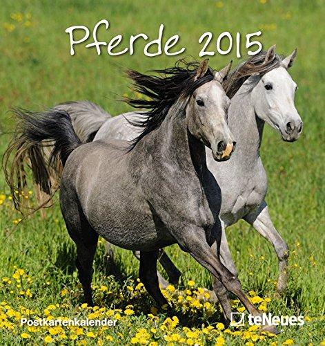 Pferde 2015