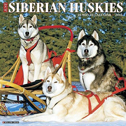 (2016 Just Siberian Huskies Wall Calendar)