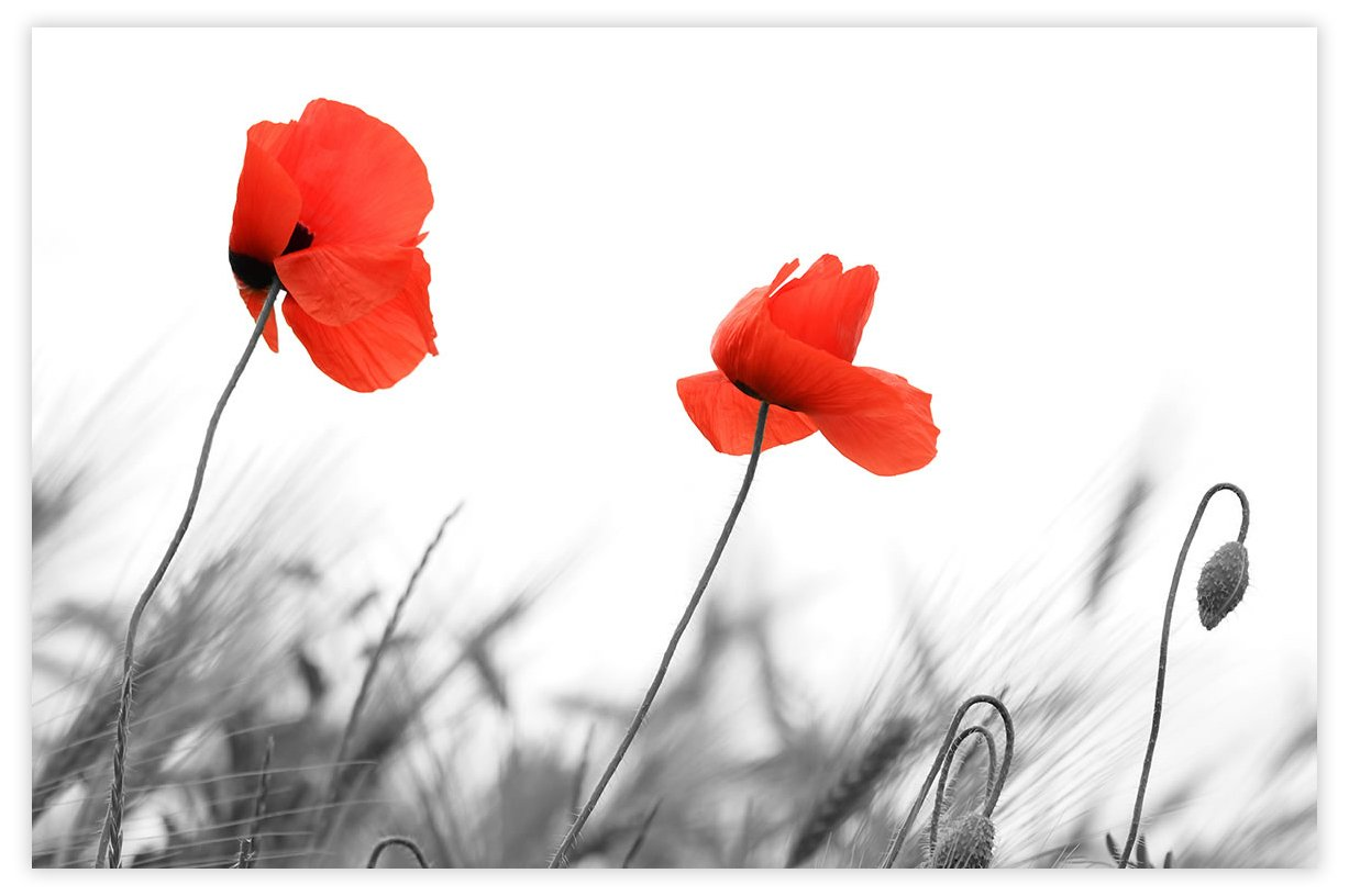 Picture Sensations Glow in The Dark Canvas Wall Art, Flower Red Poppy by Picture Sensations
