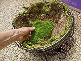 Super Moss (21508) Preserved Sheet Moss, Fresh Green 20-24 sq feet Appx 3.5lb