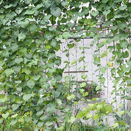 Bi-Sonic Lee Trellis Netting Plant Support for Climbing Plants, Vine and Veggie Trellis Net Climbing Frame Garden Fence Net for Flower Plant Fruit(5.5ft x 26.2ft) (Plant Netting Support)