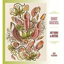 Ernst Haeckel: Art Forms in Nature 2019 Wall Calendar