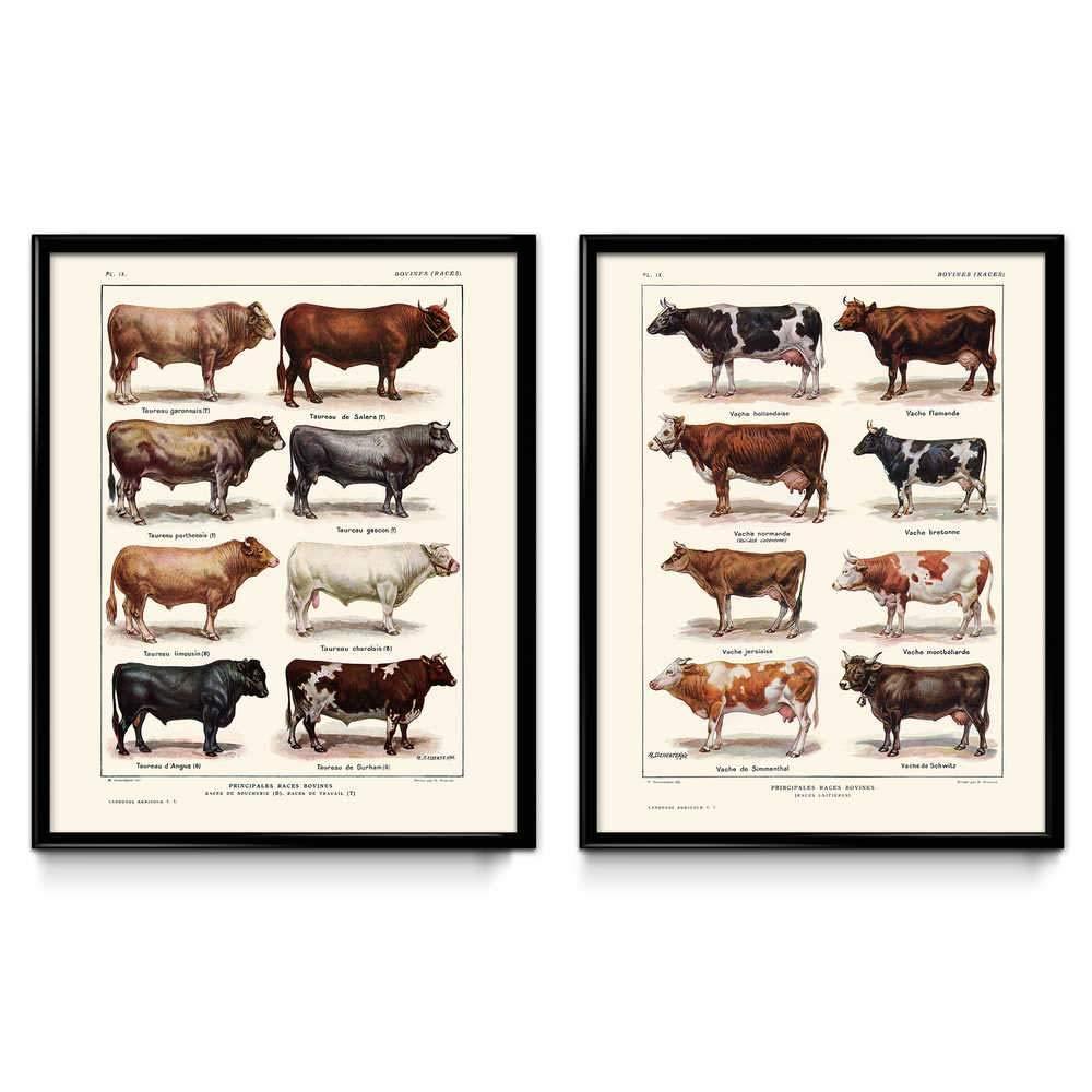 Amazon.com: Cows Breeds Vintage Print Set of 2 - Cow Poster - Cow Art - Cow Picture - Cow Illustration - Kitchen Decor - Kitchen Art - Home Picture ...