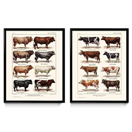 Cows Breeds Vintage Print Set of 2 - Cow Poster - Cow Art - Cow Picture