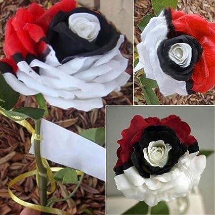 Amazon Com Rare Red White Black Hybridization Rose Flower Seeds