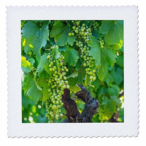 3dRose Portugal, Valley, Douro River, Wine Grapes in Porto. Quilt Square, 12 x ()
