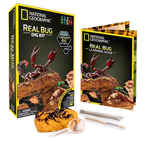 (NATIONAL GEOGRAPHIC Real Bug Dig Kit - Dig up 3 Real Insects including Spider, Fortune Beetle and Scorpion - Great STEM Science gift)