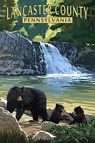 Lancaster County, Pennsylvania - Black Bears and Waterfall (9x12 Collectible Art Print, Wall Decor Travel Poster) (Wall Black Lantern Lancaster)