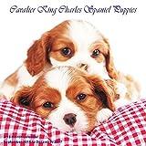 Puppies Calendar - 2017 Wall Calendars - Calendar 2016 - Dog Breed Calendars - Monthly Wall Calendar - Cavalier King Charles Spaniel Puppies Caledar by Magnum