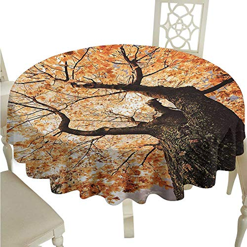 Wrinkle Resistant Tablecloth Forest Body of Old Tree Seedling Botany Woodsy Roots Falling Maple Leaf Design Print Excellent Durability D36 Suitable for picnics,queuing,Family