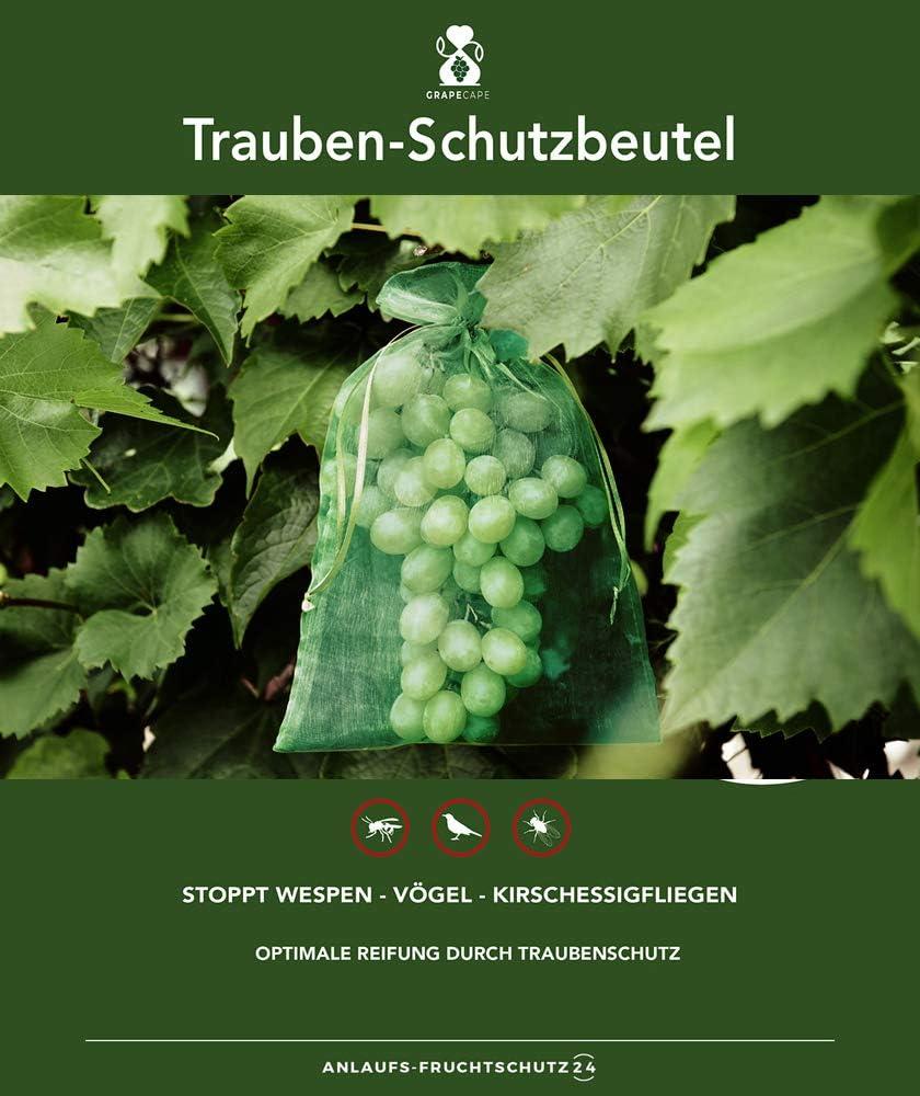 50 bolsas protectoras para las uvas, tamaño 30x20 cm, color: verde oscuro, para la protección contra las avispas, pájaros, moscas de la cereza e insectos. Bolsas protectoras para frutas organza