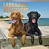 Labrador Retrievers 2018 12 x 12 Inch Monthly Square Wall Calendar with Foil Stamped Cover, Animals Dog Breeds Retriever (English, French and Spanish Edition)