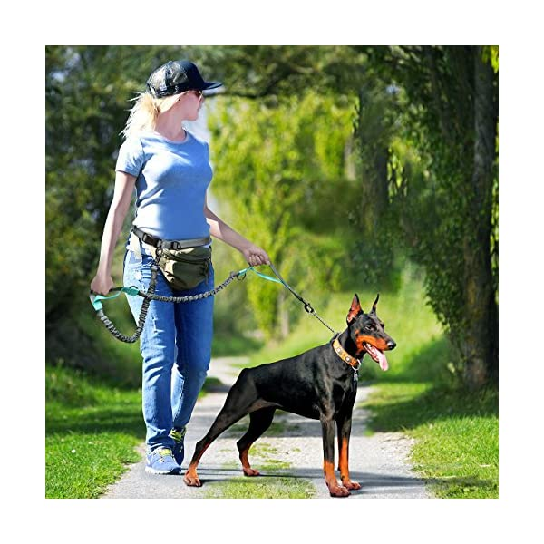 SHINE HAI Retractable Hands Free Dog Leash with Dual Bungees for Dogs up to 150lbs, Adjustable Waist Belt, Reflective Stitching Leash for Running Walking Hiking Jogging Biking 6