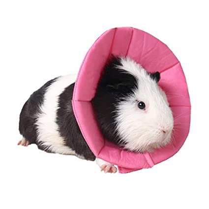 39bb80fd9ef8 Amazon.com : Mummumi- Small Pet Hamster Protective Collar Soft Mini ...