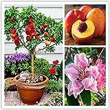 10 pcs sweet peach seeds,Peach Tree seeds,Dwarf bonanza peaches,bonsai Fruit seeds for home garden plants