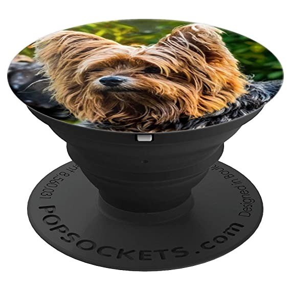 Amazon Com Dog Yorkshire Terrier Small Puppy Long Hair Cute
