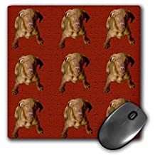 3dRose LLC 8 x 8 x 0.25 Inches Vizsla Puppy Pattern Mouse Pad (mp_48745_1)