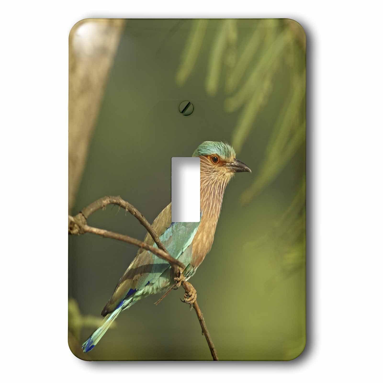 3dRose lsp_70543_1 Indian Roller Bird, Corbett Np, Uttaranchal, India-As10 Jra0089 Jagdeep Rajput Single Toggle Switch