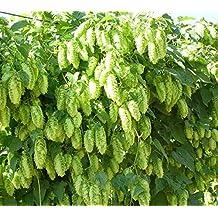 hops plants for sale