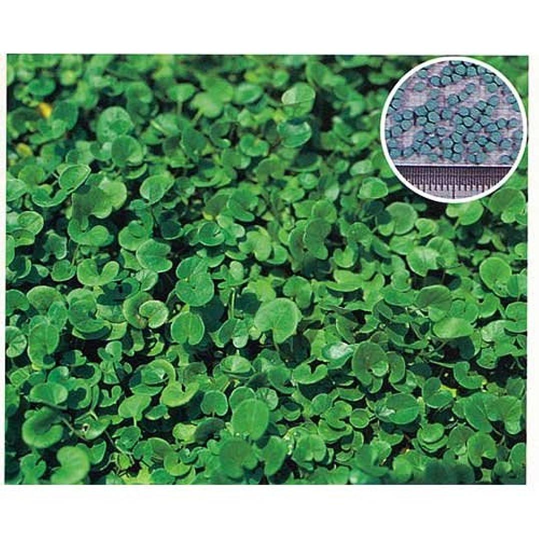 カリキュラムスピン約束する芝の種(業務用):西洋芝ペレニアルライグラス?PNW 1kg[草丈30~50cm 極濃緑、極緻密][ヘイローの後継品種]
