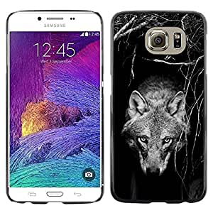 Paccase / SLIM PC / Aliminium Casa Carcasa Funda Case Cover para - tame wild wolf dog black white canine - Samsung Galaxy S6 SM-G920