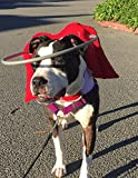 Muffin's Halo Guide For Blind Dogs - Angel Wing Red (2XL)