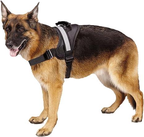 Arnés para perro grande, suave, sin tirones, reflectante.: Amazon ...