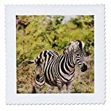 3dRose Andrea Haase Animals Illustration - Zebra Mother With Child Watercolor Illustration - 22x22 inch quilt square (qs_268155_9)
