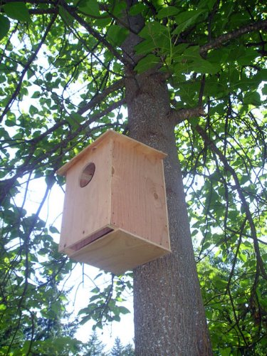 Barn Owl Nesting Box by MHB (Image #3)