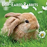 Lop Eared Rabbits 2019 12 x 12 Inch Monthly Square Wall Calendar, Domestic Small Pets Animals